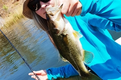 I also managed to catch a bass