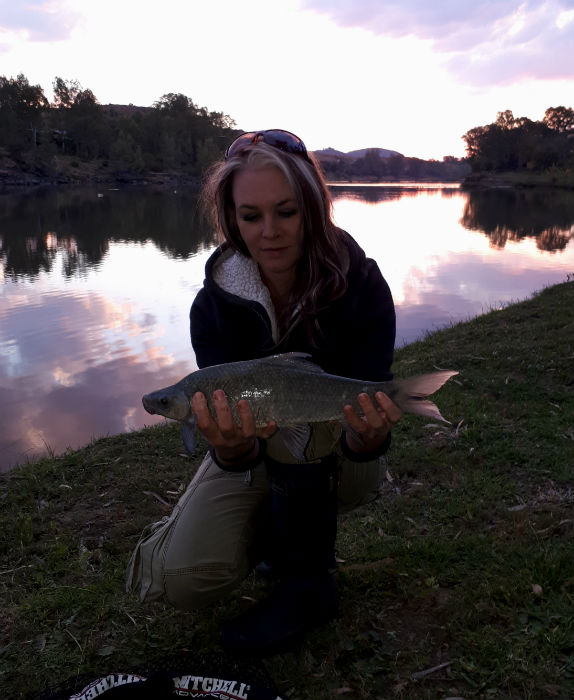 flamingos vaal river first mudfish