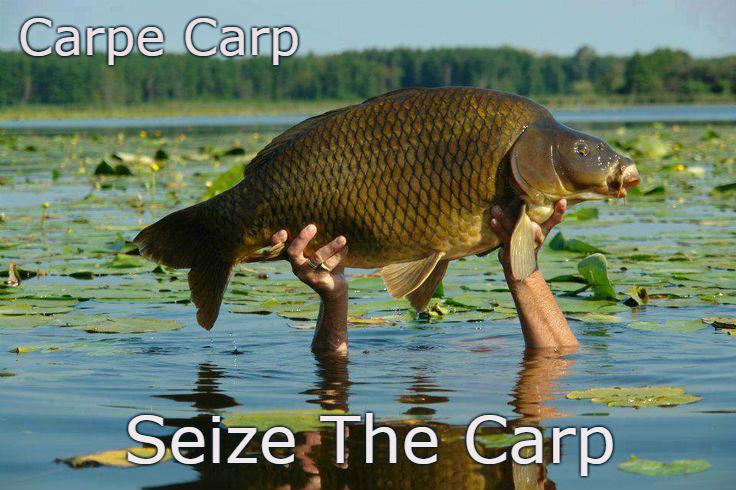 seize the carp