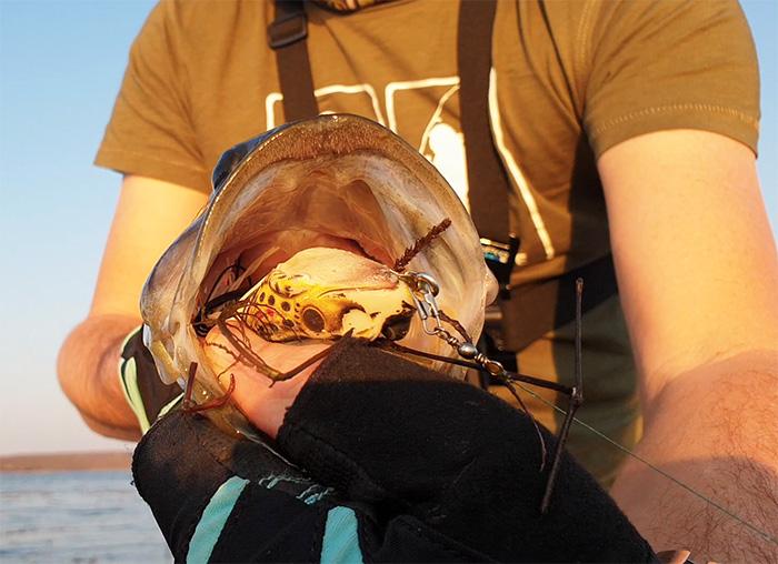 rust de winter topwater frog bass fishing
