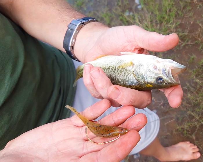 bell park dam baby bass