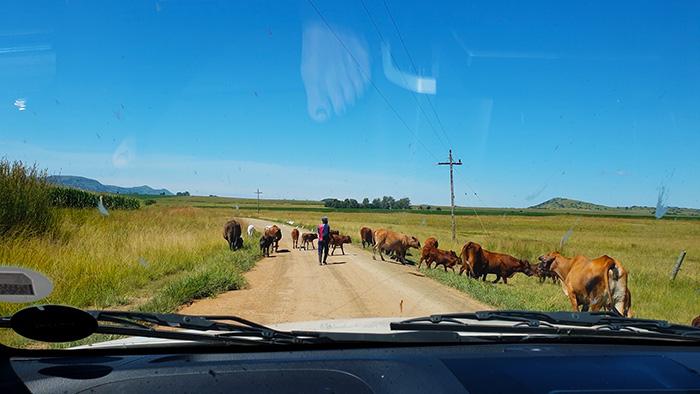 dalmore traffic